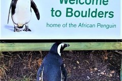 16-BOULDERS-PENGUIN-COLONY