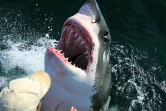 15-SHARK-CAGE-DIVING-