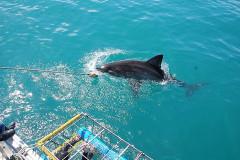 2008-CLIENTS-SHARK-PICS-23