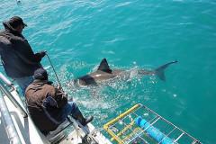 2008-CLIENTS-SHARK-PICS-30