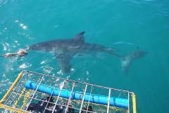 2008-CLIENTS-SHARK-PICS-37